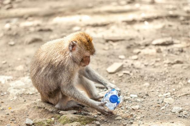 Ein affe, der mit einer platinflasche spielt.