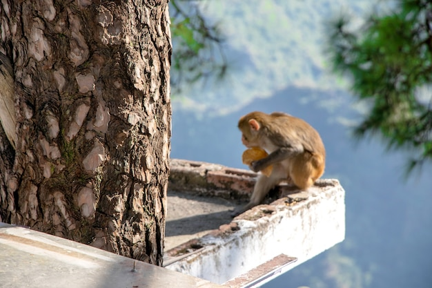 Ein affe sitzt auf dem hausdach