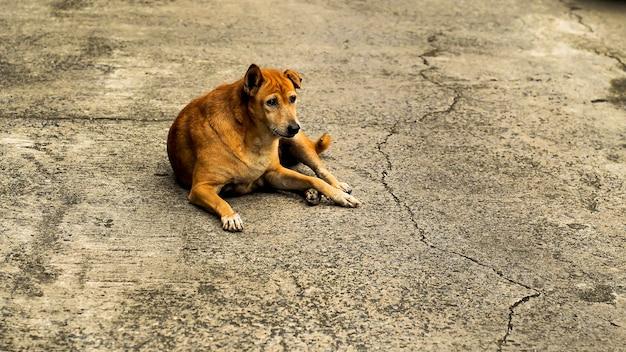 Ein alter brauner streunender hund, der ernsthaft anstarrt und auf dem bürgersteig liegt