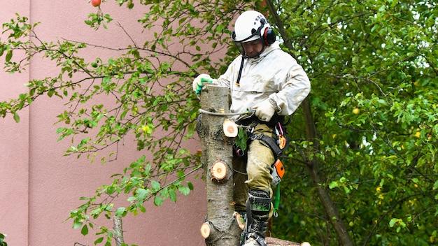 Ein arbeiter mit helm arbeitet in einer höhe in den bäumen. baumpfleger schneidet äste mit einer kettensäge und wirft sie zu boden. holzfäller arbeitet mit ketten.