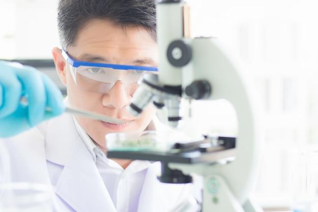 Ein asiatischer männlicher wissenschaftler trägt eine brille und handschuhe und klemmt gegenstände in eine petrischale, die in ein mikroskop gestellt wird, um wissenschaftliche experimente durchzuführen.