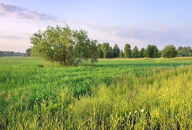 Ein ausladender baum inmitten von grünem gras und wildblumen im sommer