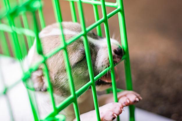 Ein babyhund in mammal tier des grünen käfigs