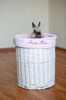 Ein babykorb mit der aufschrift süßes zuhause, aus dem ein graues langhaariges erwachsenes kaninchen guckt