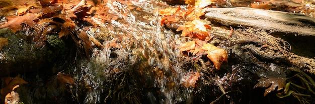 Ein bach, der durch die kahlen wurzeln von bäumen in einer felsigen klippe und gefallenen herbstblättern fließt. banner