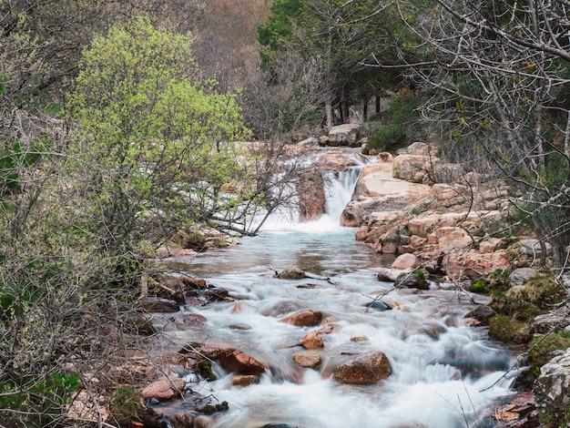 Ein bach im wald an einem sonnigen tag. wasser fließt durch einen bach in der nähe der berge.