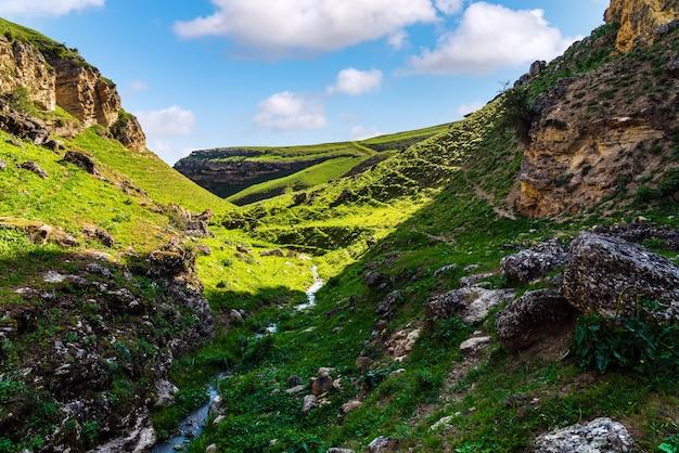 Ein bach in einer grünen bergschlucht