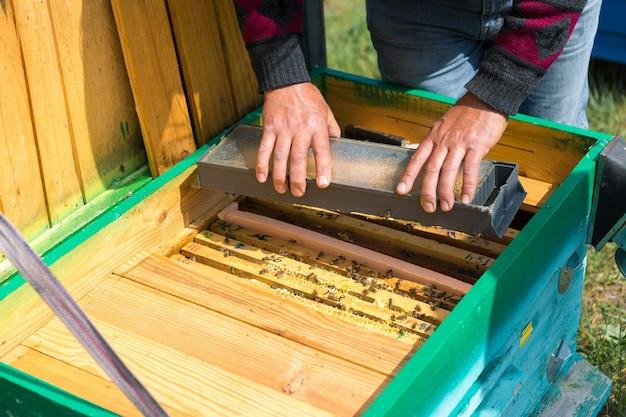 Ein bauer auf einem bienenstand hält rahmen mit wachswaben. geplante vorbereitung für die honigsammlung.
