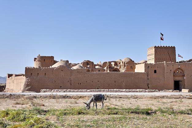 Ein bauernburro, der nahe antiker festung saryazd, iran weidet.
