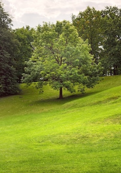 Ein baum auf einem grünen hang. hell erleuchteter rasen in einem sommerpark