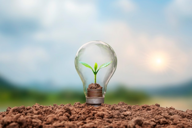 Ein baum, der auf einer münze in einer glühbirne wächst, einschließlich sonnenuntergangshintergrund