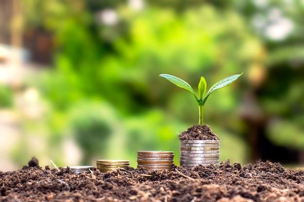 Ein baum, der auf geld- und bodenhaufen gedeiht ein erfolgreiches finanz- und anlagekonzept