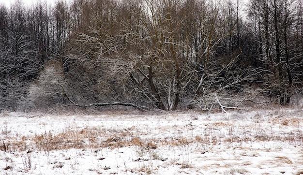 Ein baum, der in einer wintersaison auf einem schneebedeckten feld wächst