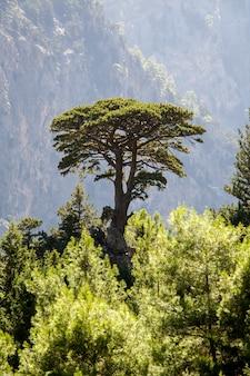 Ein baum im hochgebirge in der umgebung wind und regen und erfrischender grüner wald