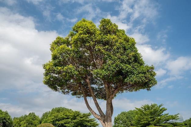 Ein baum im park unter blauem himmel hat eine große krone