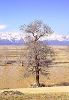 Ein baum in der kurai-steppe ein kahler baum am ufer des chuya-flusses