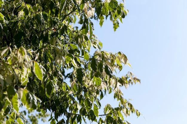 Ein baum mit weißem und grünem laub