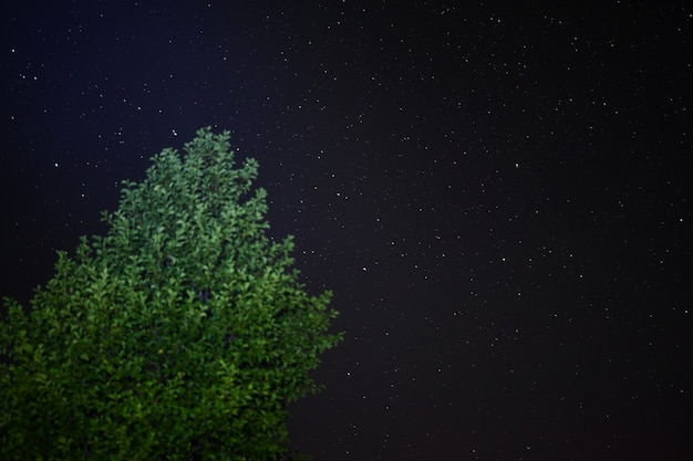 Ein baum vor dem hintergrund heller nachtsterne abseits von städten in freier wildbahn. abenteuerreisender lebensstil. konzept fernweh.