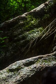 Ein bild eines großen baums in einem tropischen wald, der die fülle des waldes zeigt.