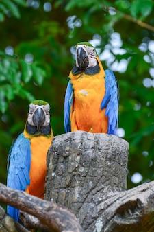 Ein blau-gelber papagei