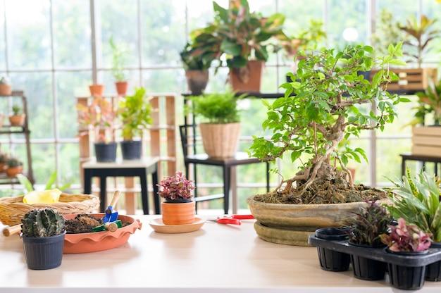 Ein blick auf innengarten im modernen haus, hausgarten und hobbykonzept.