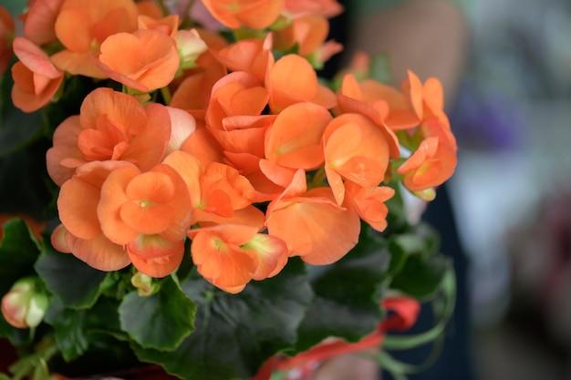 Ein blumenhändler, der eine vase mit orangefarbenen begonien in den händen hält