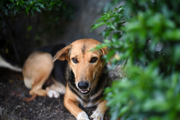 Ein brauner und schwarzer hund, der unter dem grünen busch an einem sonnigen heißen tag ruht.