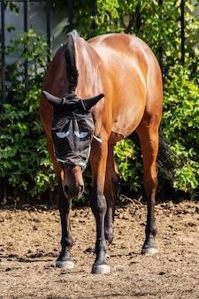 Ein braunes pferd im moskitonetz für den kopf mit aufgemalten augen
