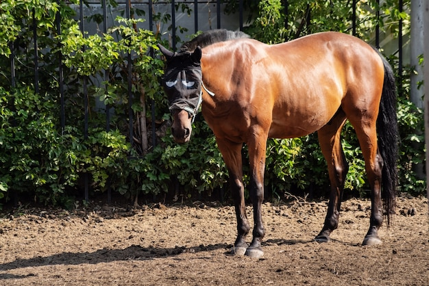 Ein braunes pferd in einem moskitonetz für den kopf. foto aufgenommen in russland, in der stadt orenburg