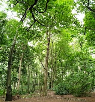 Ein breiter rahmen tropischer wildnis.