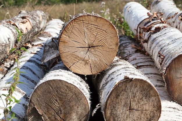 Ein bündel alter rissiger birkenstämme liegt nach dem schneiden zum abholzen vor der verarbeitung in der industrie