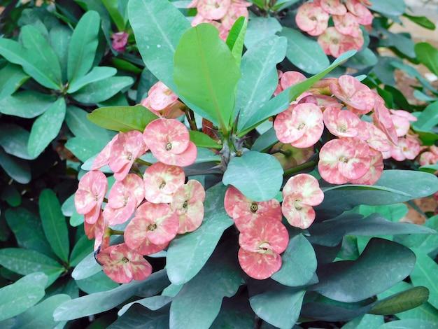 Ein bündel schöne rosa blumen mit gesunden blättern