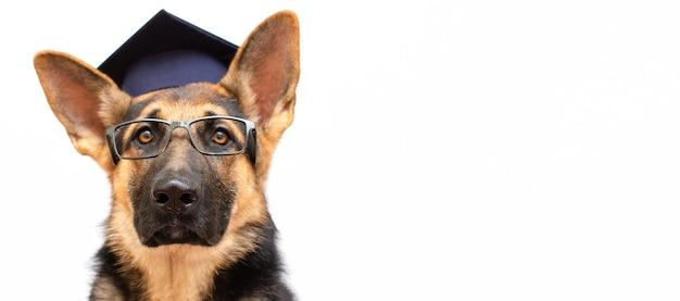 Ein deutscher schäferhund, der eine abschlusskappe und eine brille trägt, intelligenter hund auf weißem banner-kopierraum