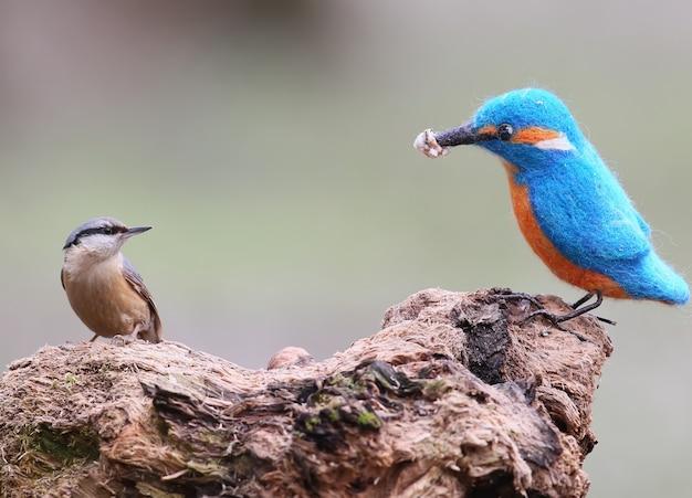 Ein echter kleiber und ein ausgestopfter vogel