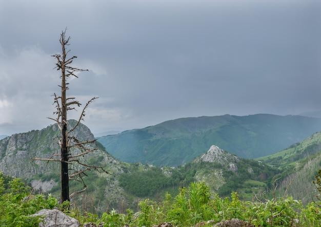 Ein einsamer baum auf dem berg wird durch ein gewitter beschädigt.