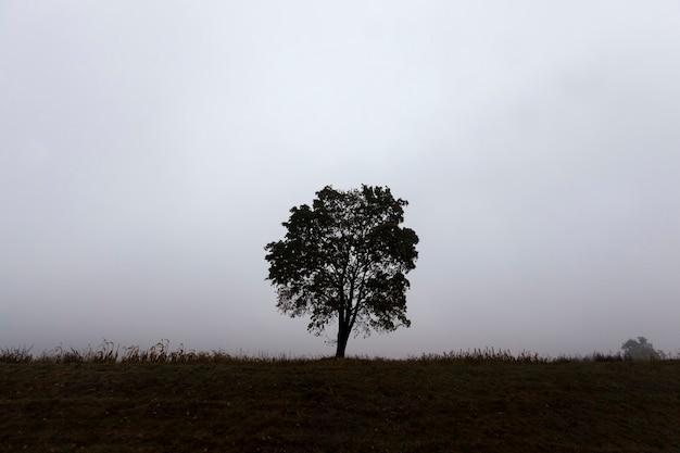 Ein einsamer baum wächst in einem wüstengebiet, der baum ist hoch und hebt sich von den anderen bäumen ab, wunderschöne natur mit einem einzigen baum