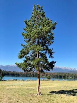 Ein einzelner tannenbaum in der nähe des sees mit bäumen und hohen felsigen bergen