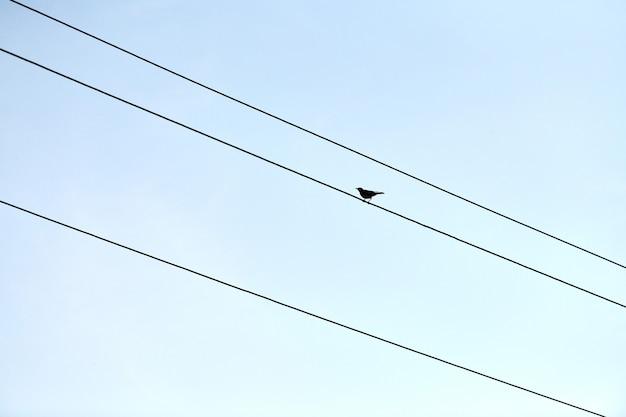 Ein einziger vogel auf draht. einsamkeit-konzept. selbstisolation von außenstehenden
