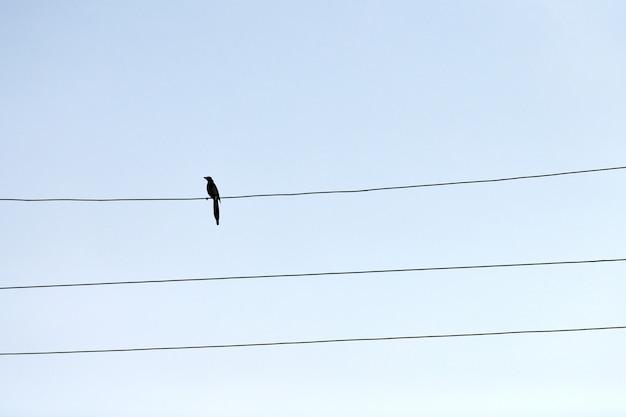 Ein einziger vogel auf draht