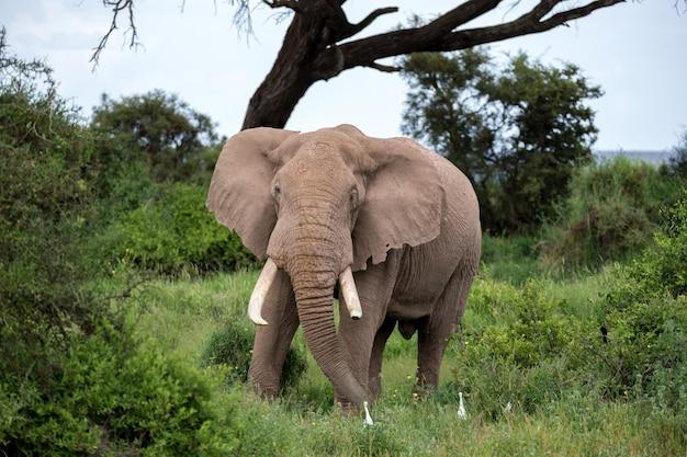 Ein elefant in der savanne eines nationalparks