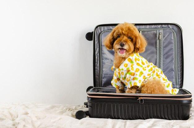 Ein entzückender brauner pudelhund, der hut und kleid trägt, während er im gepäck sitzt