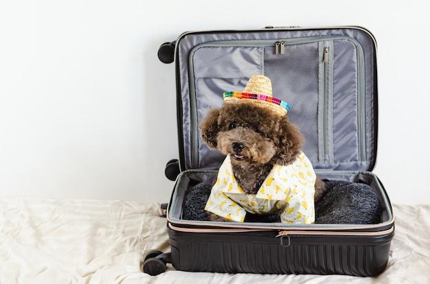 Ein entzückender schwarzer pudelhund, der hut und kleid trägt, während er im gepäck sitzt