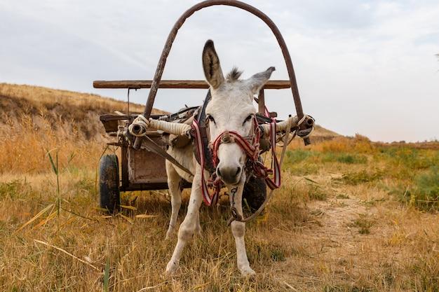 Ein esel mit einem karren steht auf einer wiese und freut sich