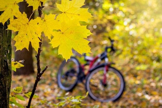 Ein fahrrad im wald zwischen gelben ahornblättern im herbst