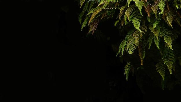 Ein farn gehört zu einer gruppe von gefäßpflanzen