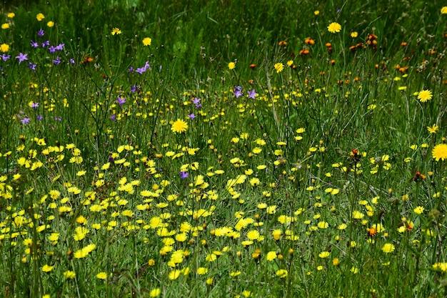 Ein feld mit einer vielzahl von wildblumen und grünem gras über den gesamten rahmen. der hintergrund ist verschwommen