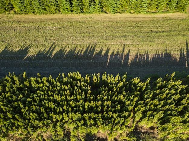 Ein feld mit jungen dampfpackungen im wald zwischen grünen laubbäumen, ein foto von einer drohne