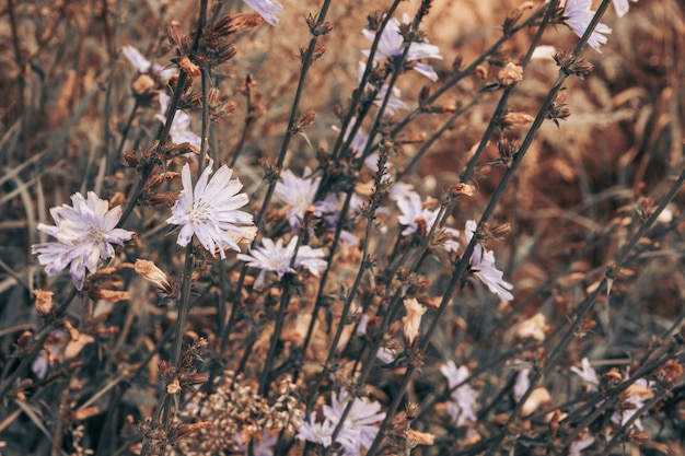 Ein feld mit zarten wildblumen, ruhigen farben