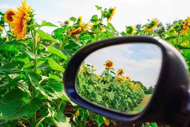 Ein feld von sonnenblumen reflektierte sich in einem autospiegel.