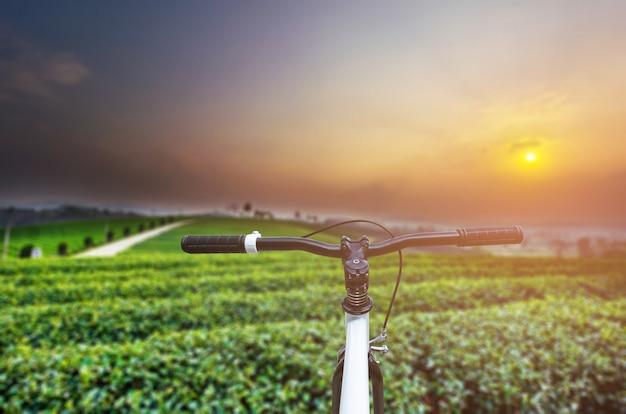 Ein festes gangfahrrad mit teeplantagenlandschaft.